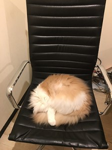 sleep,chair